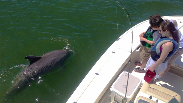 dolphin watching on a shark fishing charter in Hilton Head Island