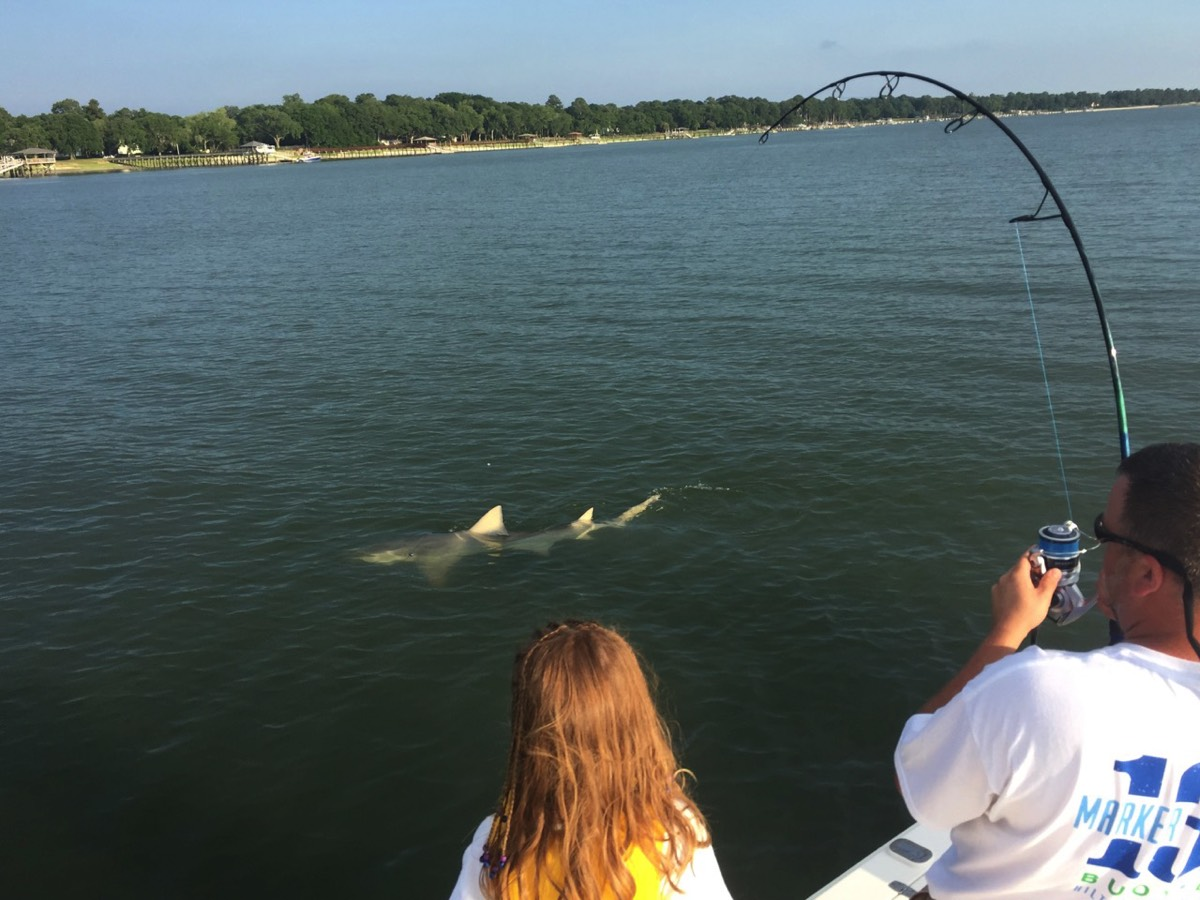 Live oac hilton head dolphin eco tours watersports for Hilton head inshore fishing